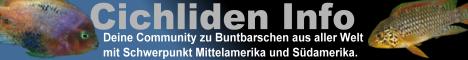 Cichliden Info Forum