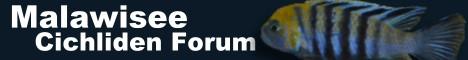 Malawisee Cichliden Forum