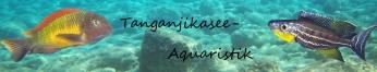 tanganjikasee-aquaristik