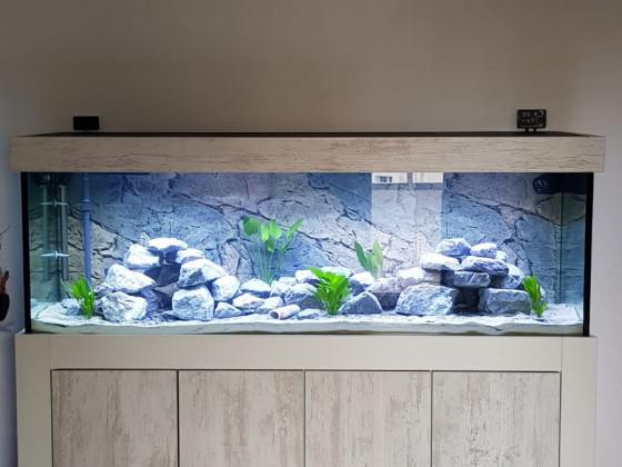 Neues Becken mit 32 Tropheus Kachese